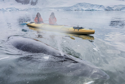 Scenic Eclipse Kayak and Whale